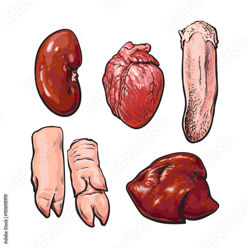 Photo  Pork offal, vector sketch narisovany by hand, isolated set of pig organs, animal