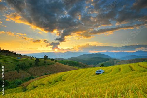 Spoed Fotobehang Rijstvelden Cornfield sunset of Thailand.