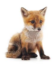 Fototapeta Little fox.