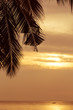 Abstract coconut leaf on the sunset background with copy space.