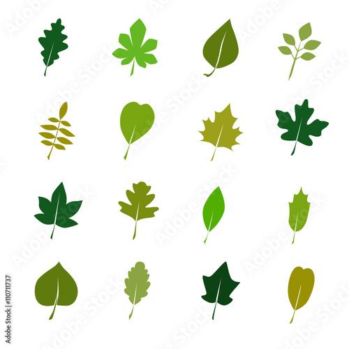 Fototapeta Set of color tree leaves icon obraz na płótnie