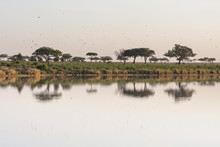 Lake In Savanna Plain With Aca...
