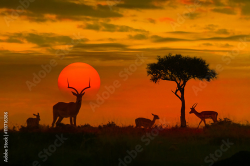Aluminium Prints Africa African sunset with silhouette