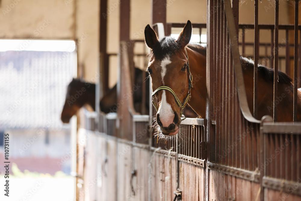 Fototapety, obrazy: Horse in a stall