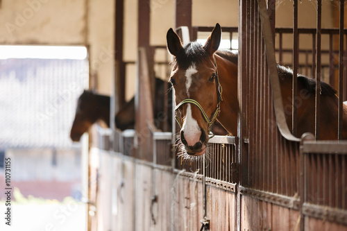 La pose en embrasure Chevaux Horse in a stall