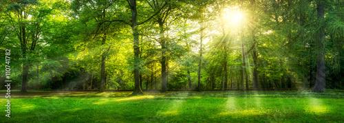 Zielona lasowa panorama w lecie z słońce promieniami