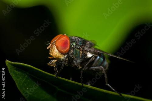 Foto op Plexiglas Textures Macro photography showing a flesh fly