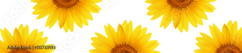 header web  panorama sunflower flower full length - 110769193