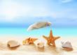 seashells on the sandy beach