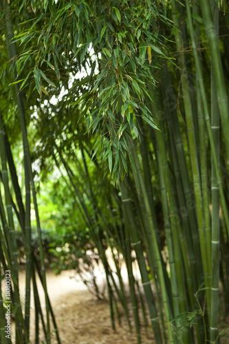 In de dag Bamboo Bamboo in a park