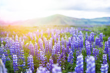 Icelandic Beautiful Landscape ...