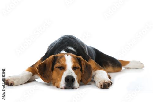 Schlafender Hund Obraz na płótnie