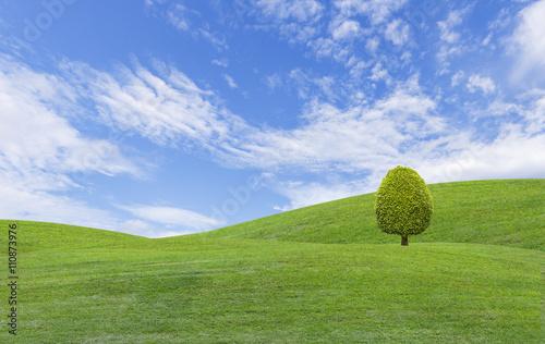 Staande foto Heuvel Trees on green grass hill