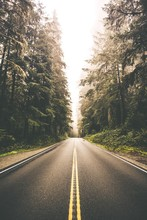 Redwood Forest Road Trip