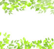 Summer watercolor background. Card with green leaves frame. Artistic summer watercolor illustration.