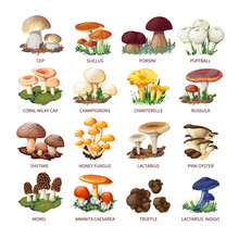 Collection Of Edible Mushrooms...