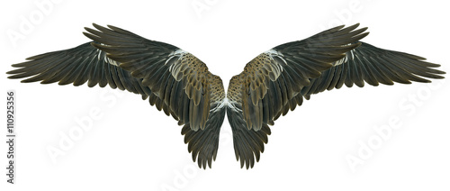 Poster Aigle Wings isolated on white
