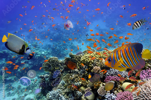 Cadres-photo bureau Tortue Coral Reef and Tropical Fish in the Red Sea