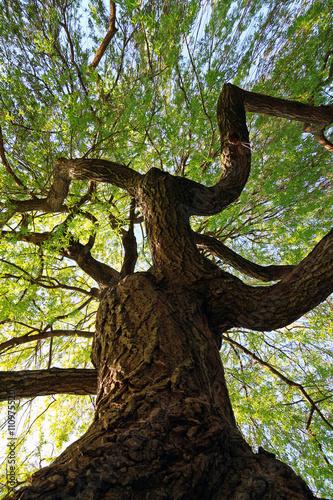 drzewo-widziane-z-dolu