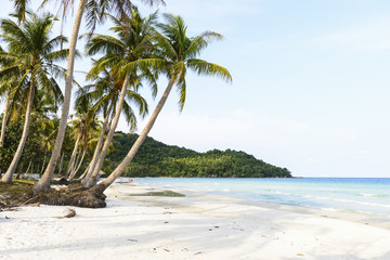 View of Sao beach and palm trees, Pho Quoc, Vietnam