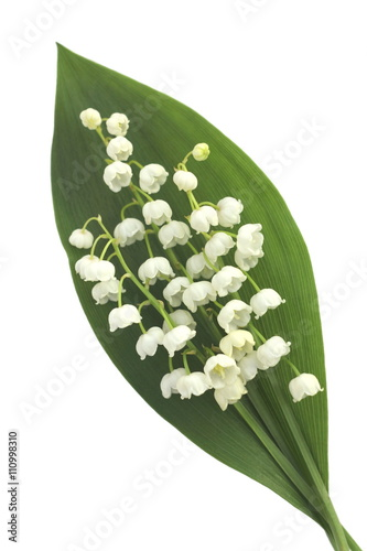 Staande foto Lelietje van dalen Lily of the valley isolated on the white background