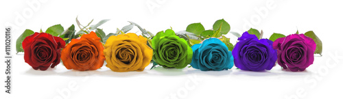 Wall Murals Roses Beautiful Rainbow Colored Row of Roses - a single line of rose heads facing forwards in red, orange, yellow, green, turquoise, indigo and magenta representing the seven chakras