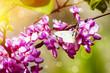 Spring or Summer Flower