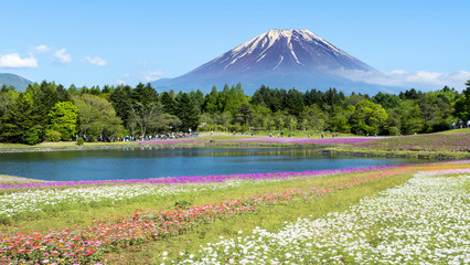 Fuji with the field of pink moss at Shibazakura festival, Yamana