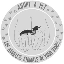 Adopt A Pet. Life Homeless Animals In Your Hands. Hand Drawn Dog And A Cat On The Hands/Pet Adoption Concept. Adopt Poster With Hand Painted Puppy And Kitten