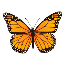 Monarch Butterfly. Hand Drawn ...