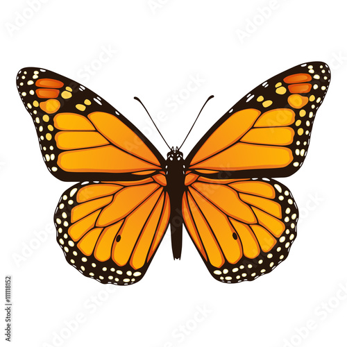 Fényképezés Monarch butterfly. Hand drawn vector illustration
