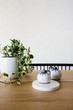 Close up of ivy pot plant and ornaments on a contemporary dining