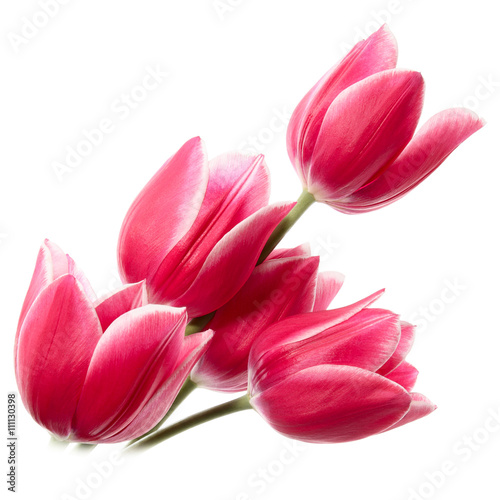 Poster Tulp Fine flowers