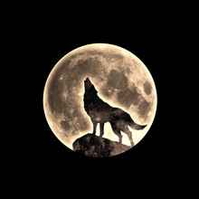 Howling Wolf, Full Moon