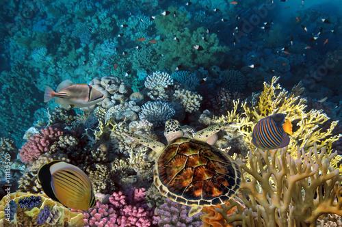 zamyka-up-gigantyczny-zolw-w-morzu-czerwony-morze