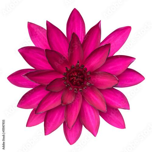 Montage in der Fensternische Lotosblume Lotus flower isolated on white