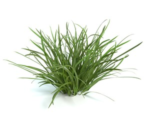3d illustration of grass