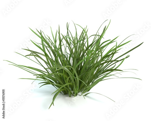 Photo sur Toile Herbe 3d illustration of grass