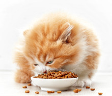 Bowl Of Cat Food And Small Kitten