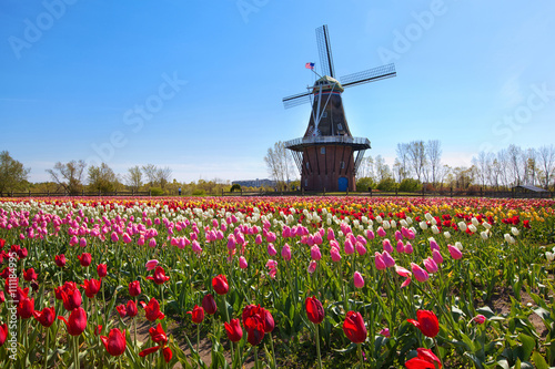 Fotografia  Wooden Windmill in Holland Michigan - Surrounded by spring tulips
