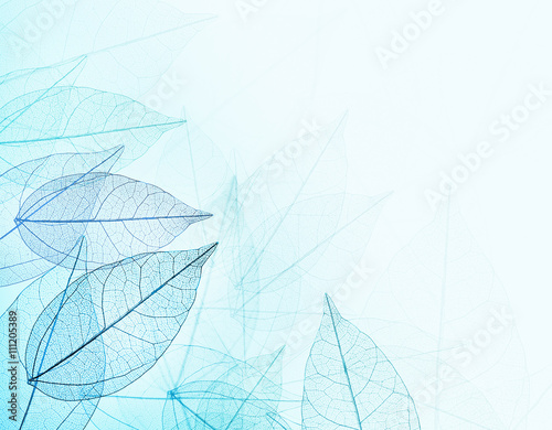 Autocollant pour porte Squelette décoratif de lame Beautiful abstract background with skeleton leaves