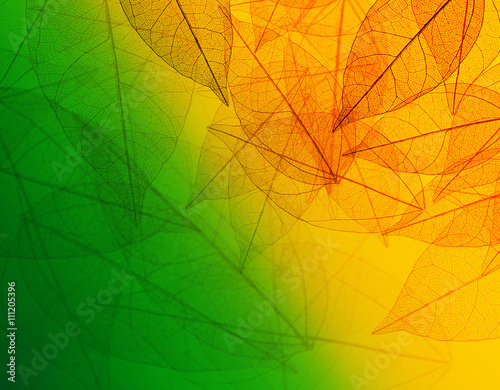 Acrylic Prints Decorative skeleton leaves Beautiful abstract background with skeleton leaves