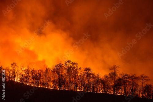 Fotografia  Forest Fire