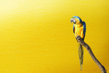 Portrait Of A Parrot On Yellow...