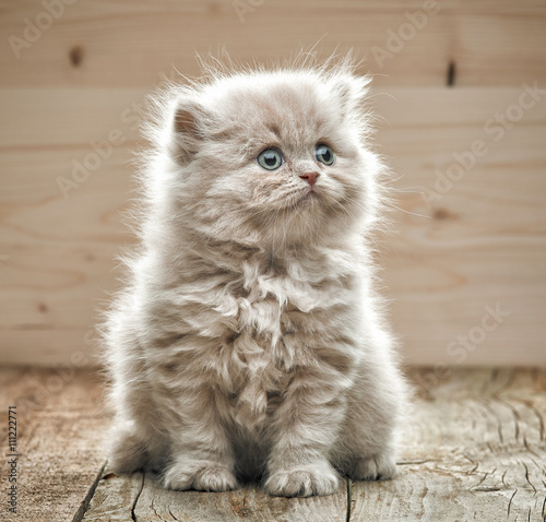 Photo  beautiful small kitten