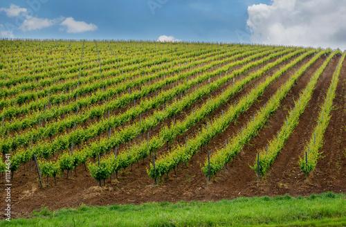Foto auf Gartenposter Landschappen Vineyard hills in the summer