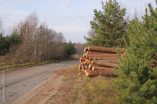 Valokuva  The pile of pine lumber