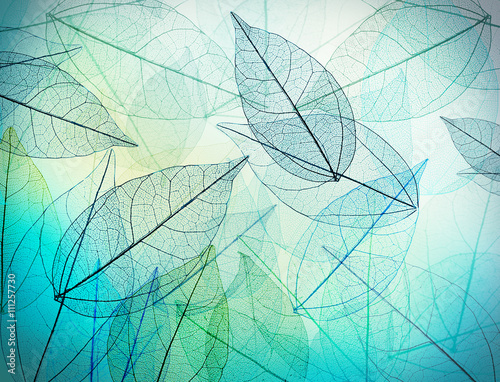 Poster Squelette décoratif de lame Beautiful abstract background with skeleton leaves