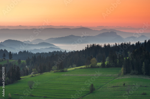 plakat Moments before sunrise in misty Carpathian mountains, spring, Poland