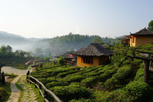 Ban Rak Thai Maehongson Province, Northern Thailand - Chinese Style Houses On Hill Side Among Tea Field  With Mountain And Fog  As Background View With Morning Light - Soft Focus With Select Focus